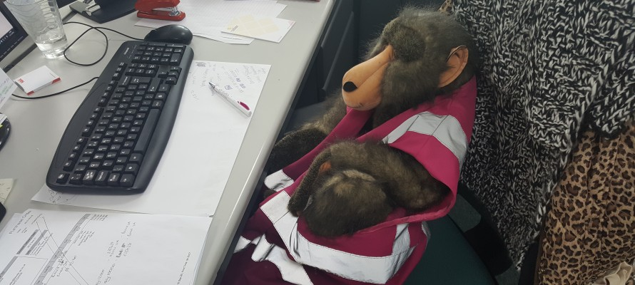 Bring Your Bear to Work
